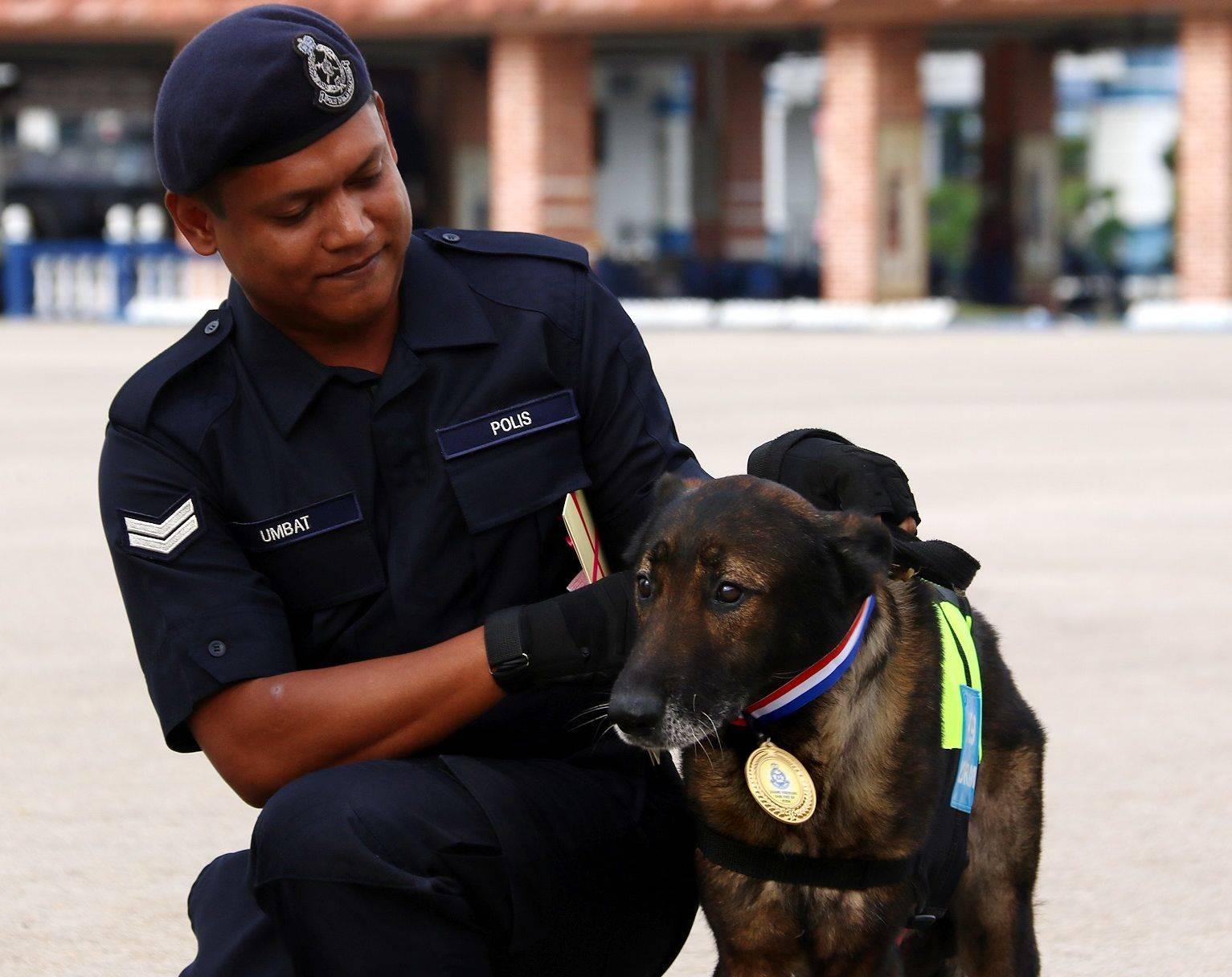 شرطة ماليزيا تكرّم كلبًا بوليسيًّا بميدالية لمساهمته في حل قضية
