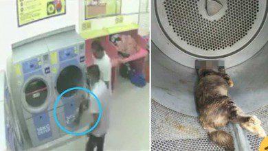 Photo of 34 شهر سجن لماليزي قتل قطة