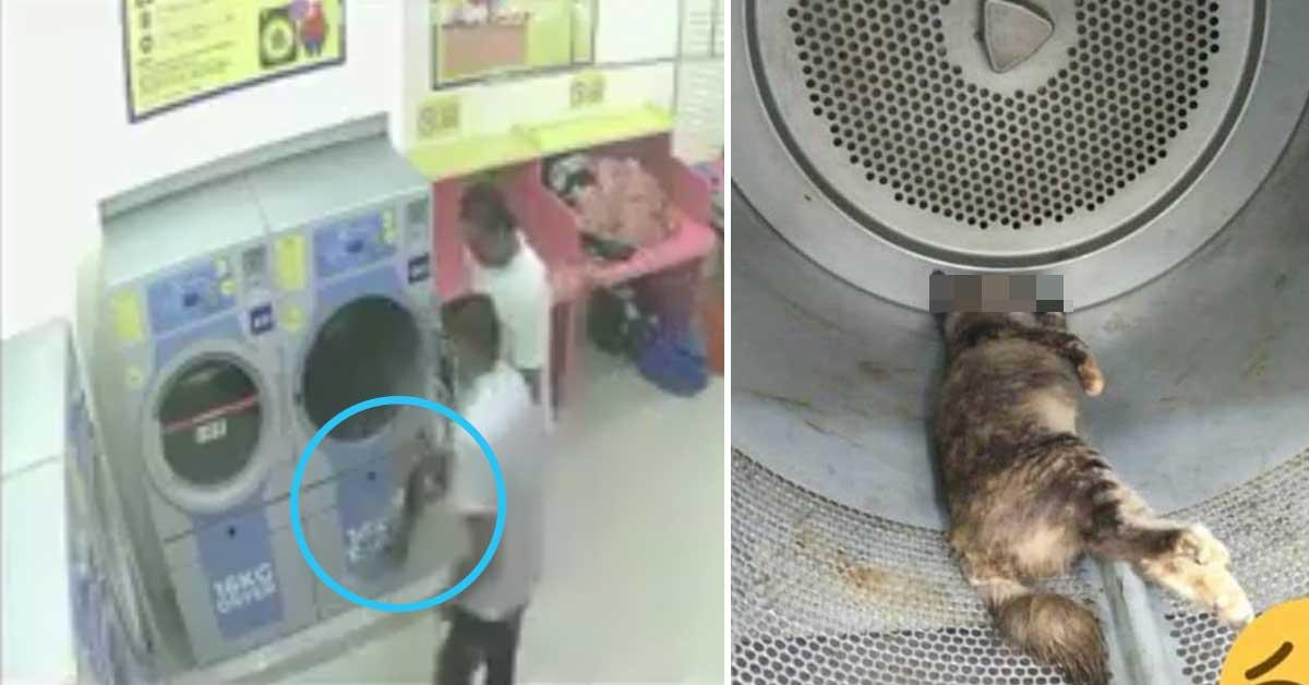 34 شهر سجن و40 ألف رنجت على ماليزي قتل قطة