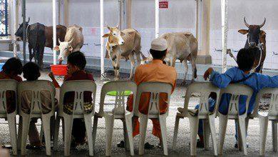 Photo of عيد الأضحى في ماليزيا.. فرصة للاحتفال وسط المخاوف والمحاذير