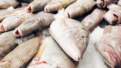 صورة التفتيش الماليزية تحبط عمليات تهريب أسماك إلى سنغافورة
