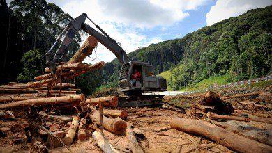 Photo of ماليزيا نحو استثمار أخشابها في أكبر مصنع محلي للأثاث