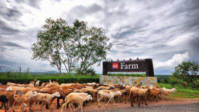 صورة دعوات لحماية الثروة الحيوانية الماليزية من التسمم