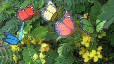 صورة حديقة فراشات كوالالمبور.. ألوانٌ جذّابة وعبير الزهور