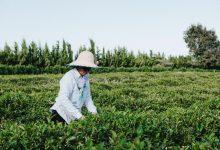 صورة رئيسة وكالة الائتمان والتنمية الزراعية في أذربيجان: الحرب عطلت تنفيذ المشروعات الزراعية التي تقوم بها المنظمات الدولية