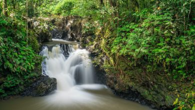 """صورة محمية """"تاواو"""" الطبيعية تعج بالزوار بعد فتحها مجدداً"""