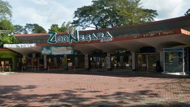 """صورة بعد أشهر من الإغلاق حديقةالحيوان الوطنية """"زو نيجارا"""" تفتح أبوابها للزوار"""
