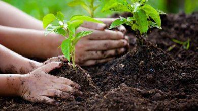 صورة ماليزيا تطلق حملة وطنية لزراعة 100 مليون شجرة