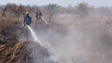 صورة الحرائق تلتهم مئات الهكتارات من غابات بهانج.. والإطفاء سيتواصل لأسبوع
