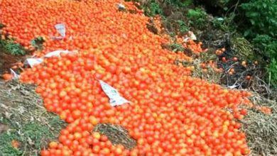صورة محاصيل زراعية مهدرة بسبب تقييد الحركة والمزارعون يناشدون الحكومة